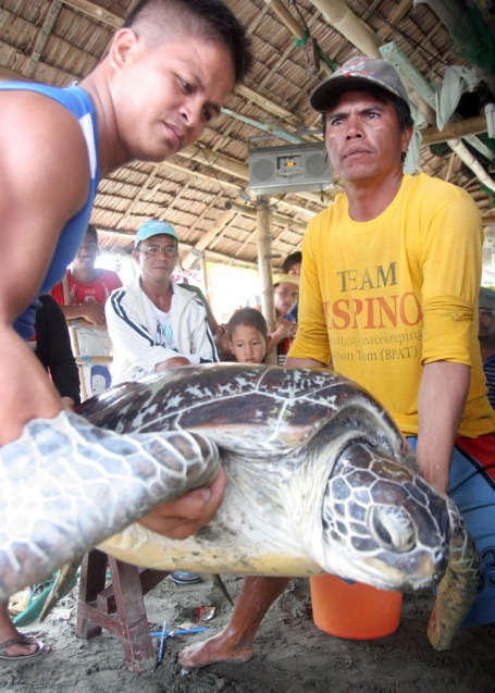 Rigor Demoral(left), a personnel of the provincial disaster risk reduction management council's(PDRRMC's) water search and rescue(Wasar), and a man lift this sea turtle found entangled at a fishing net last July 21 at the beach in barangay Libsong East in Lingayen. Fishermen immediately called the attention of the authorities regarding the said sea turtle and was released back to the sea.CESAR RAMIREZ