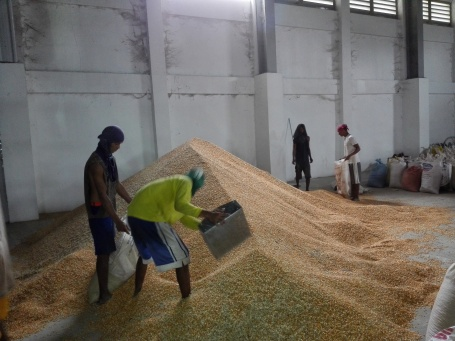 WORKERS at the Alcala Corn and Palay Drying Facility in Bersamin, Alcala are busy bagging the mechanically dried corn kernels. The facility is opened now for operations for corn drying just in time on the onset of rainy season. VIRGIL MAGANES